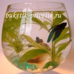 Мини аквариум с рыбкой