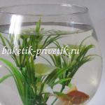 Мини аквариум с золотой рыбкой